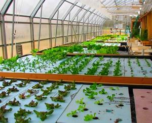 aquaponics-greenhouse